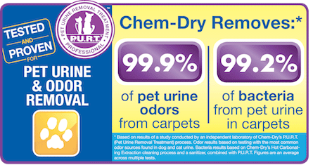 Chem-Dry Technician Providing Pet Urine & Odor Removal in Moorpark and Simi Valley